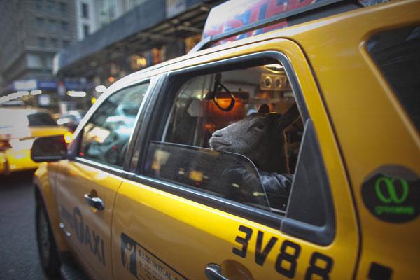capra taxi
