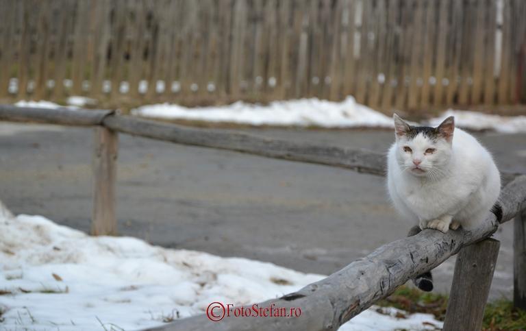 Muzeul Satului pisica alba
