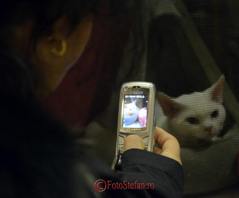 fotografierea pisicii