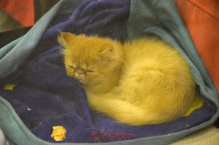 foto pisicuta