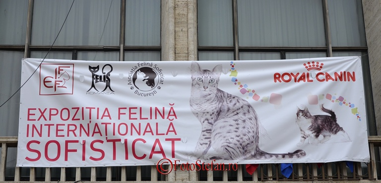 """""""Expozitie"""" de pisici la Sala Palatului"""