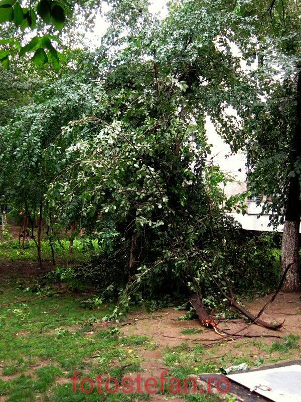 copac rupt de furtuna
