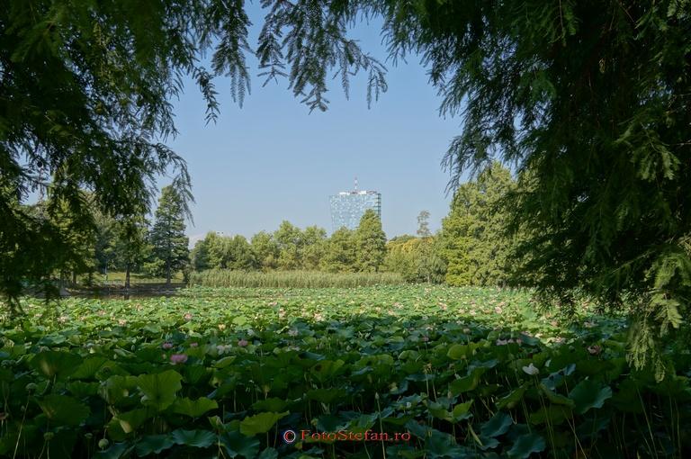 lac parc circului bucuresti