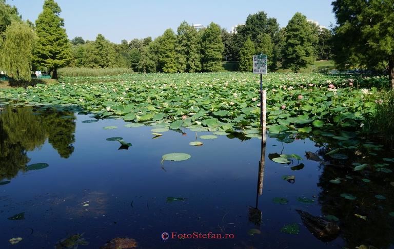 lac parcul circului bucuresti