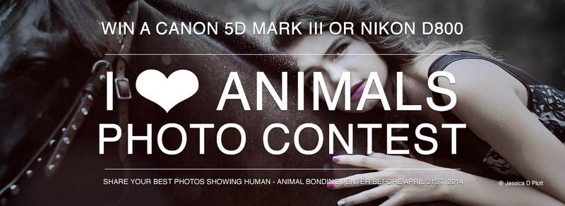 concurs foto cu poze cu animale