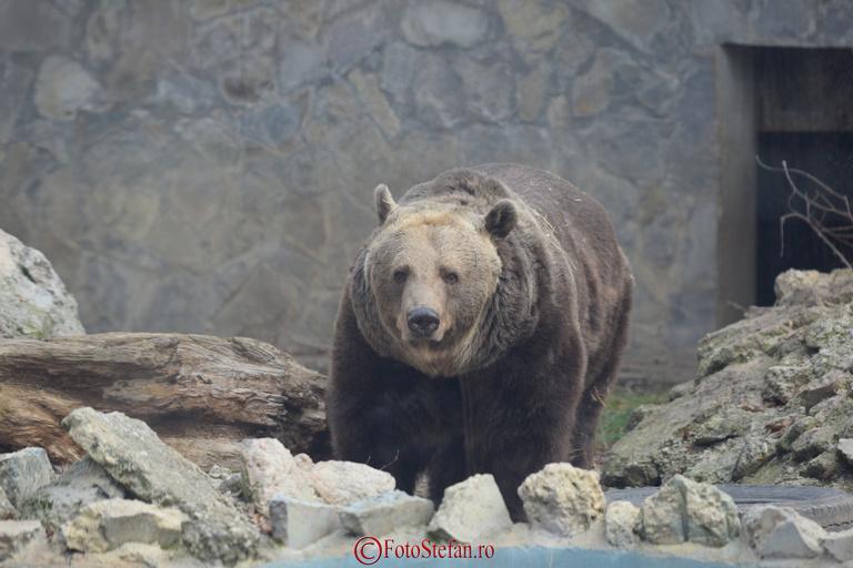 ur gradina zoologica baneasa