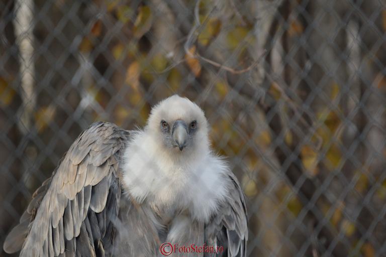 vultur plesuv zoo baneasa