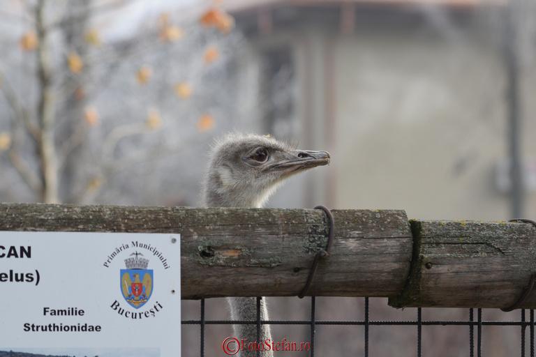 strut gradina zoologica bucuresti