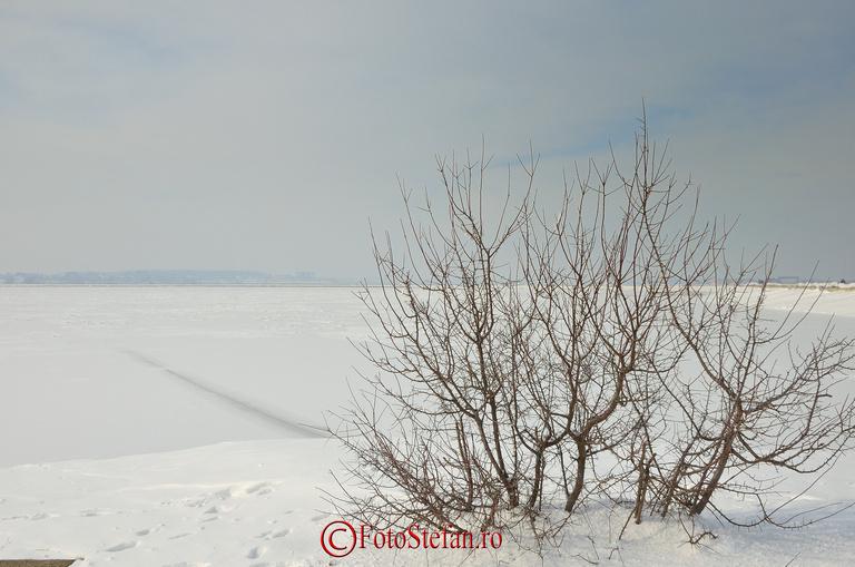 ciulini lacul morii