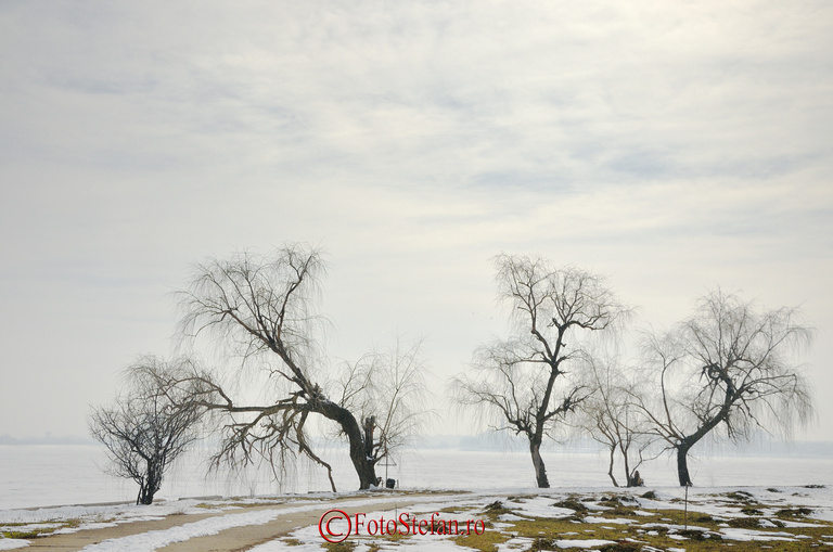 vegetatie insula lacul morii iarna