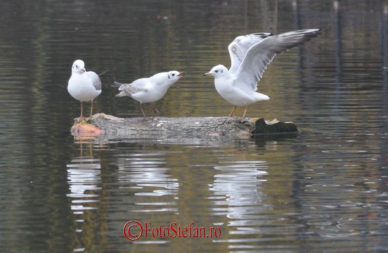 pescarusi parcul carol bucuresti