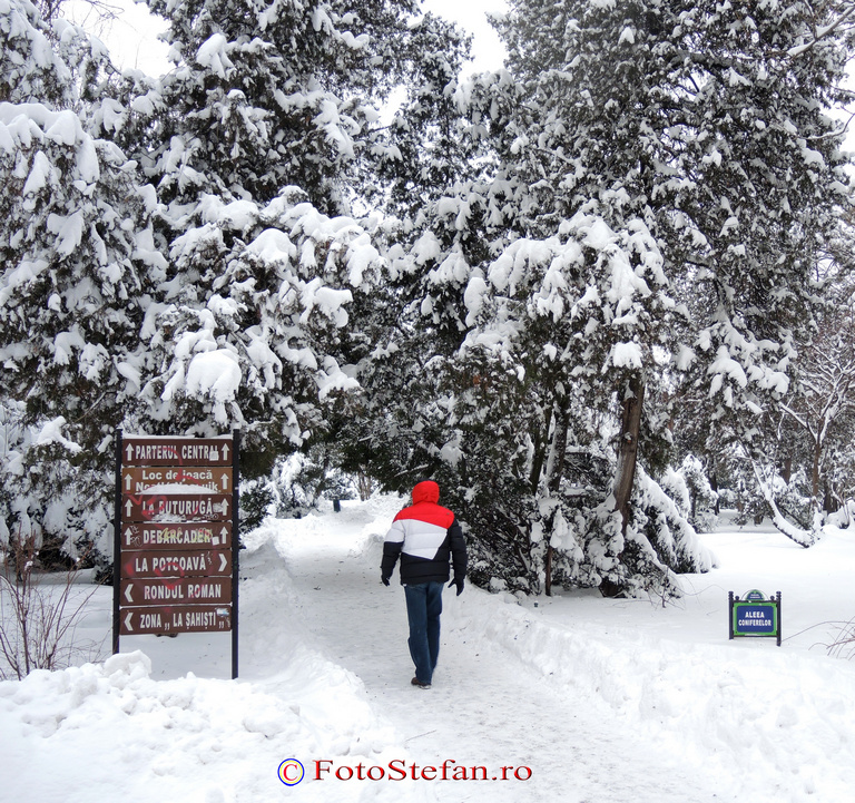 iarna gradina cismigiu