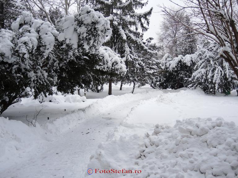parc cismigiu iarna