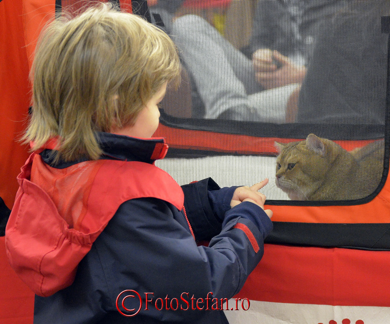 pisica baiat