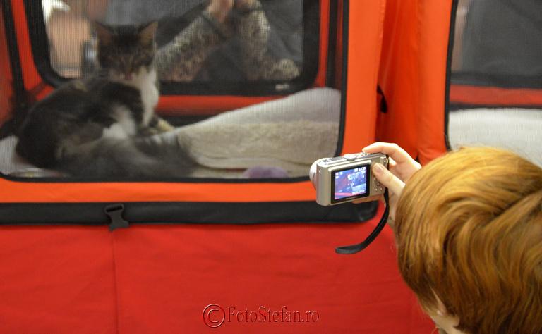 fotografiere pisica