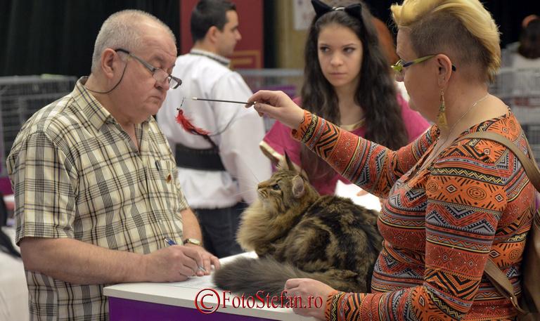 juriu concurs pisici sala palatului