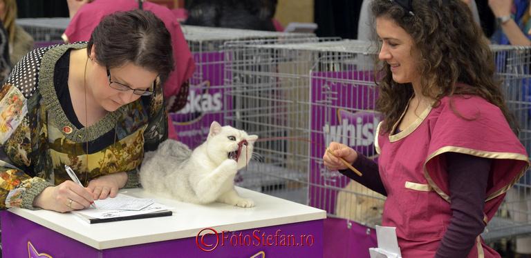 concurs expozitie pisici