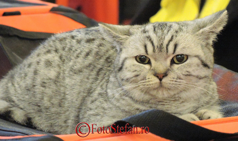 pisica la sala palatului