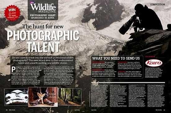 concurs de fotografie wildlife