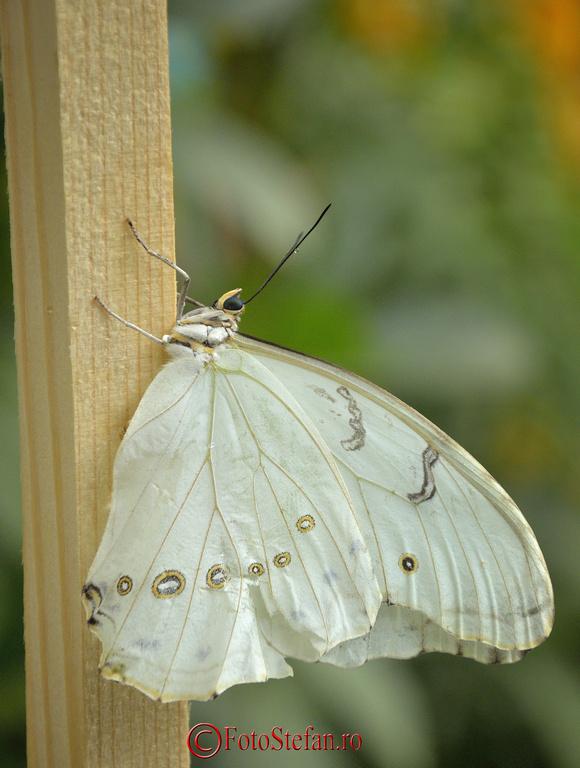 expozitie fluturi exotici gradina botanica bucuresti 2014