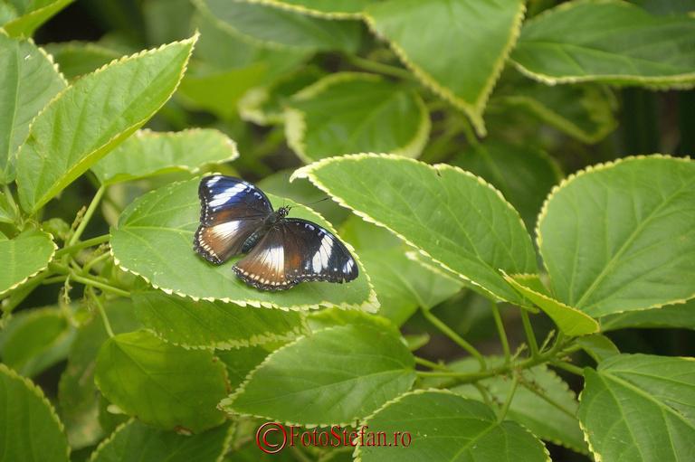 fluture tropical gradina botanica bucuresti