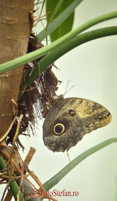 expozitie de fluturi exotici