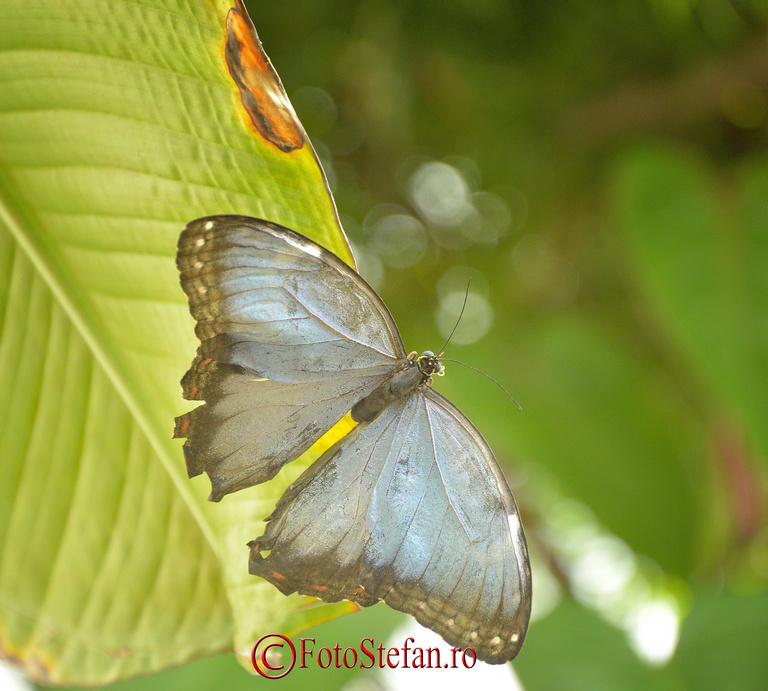 fluture frunza sera gradina botanica