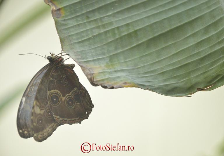 fluture sera pavilion gradina botanica