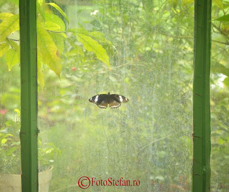 geam sera gradina botanica bucuresti