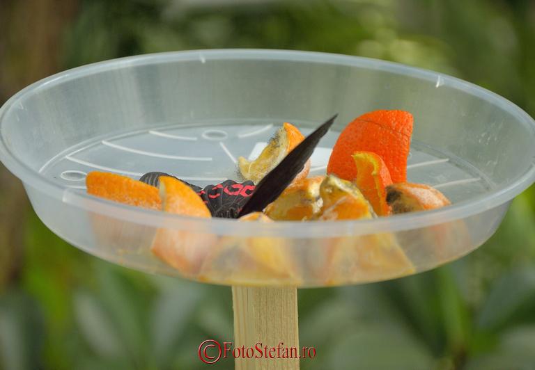hranire fluture