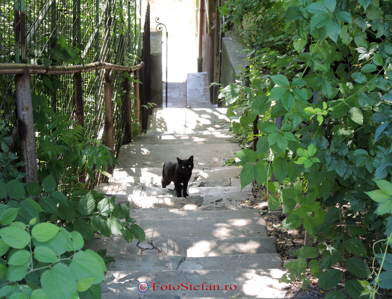 pisica neagra bucuresti