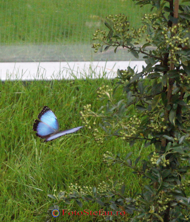 fluture tropical viu bucuresti