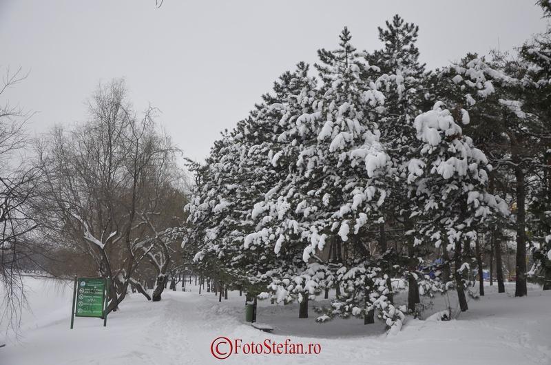 iarna in parcul herastrau