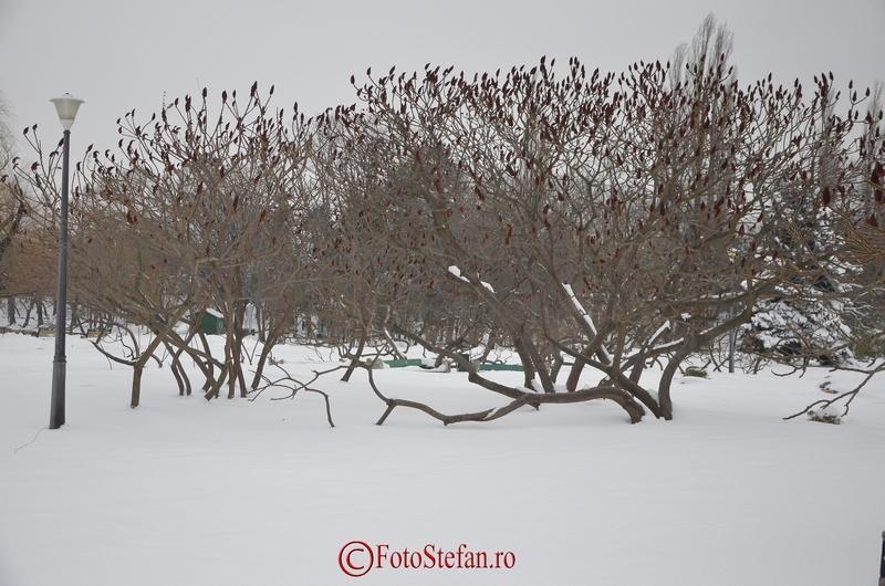 copac iarna herastrau
