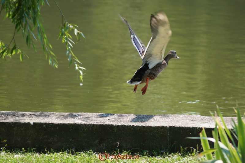 rata luindu-si zborul