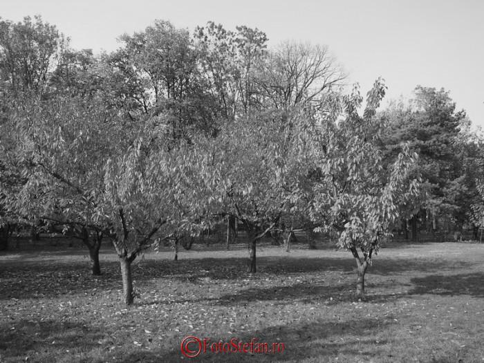 alb negru poza olympus e-m10 fotografierea florilor de ciresi