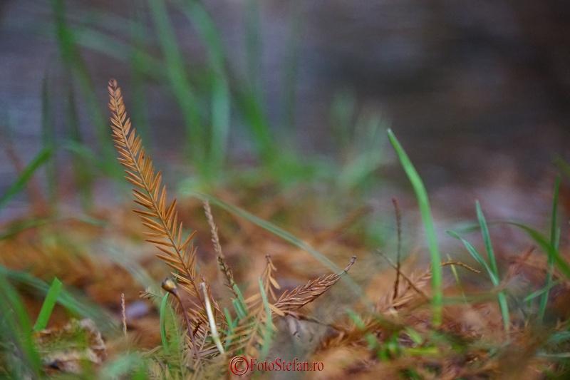 iarba fundal