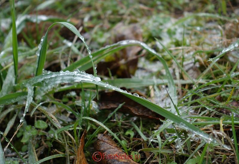 iarba gheata picaturi