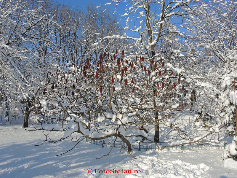 gradina japoneza herastrau bucuresti iarna