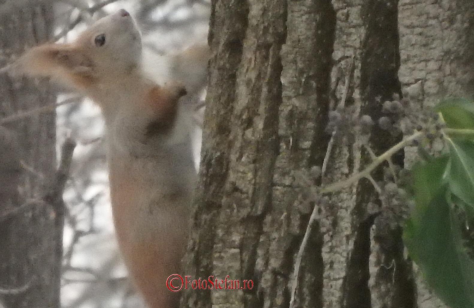 veverita iarna parc carol bucuresti