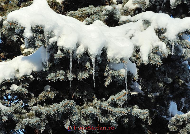 frig parcul herastrau bucuresti iarna zapada