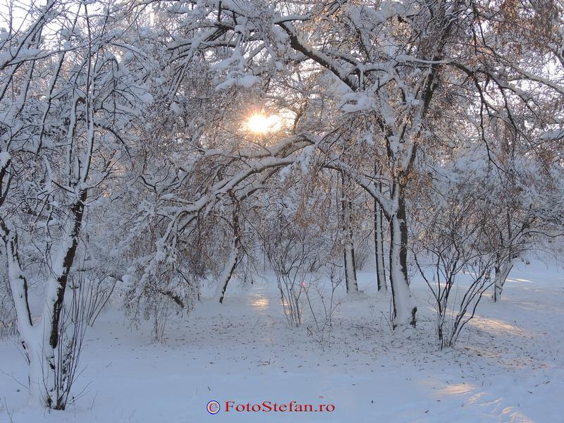 parcul herastrau bucuresti iarna