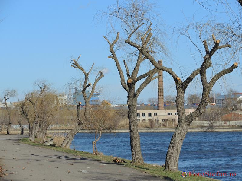copaci altoiti parc plumbuita bucuresti