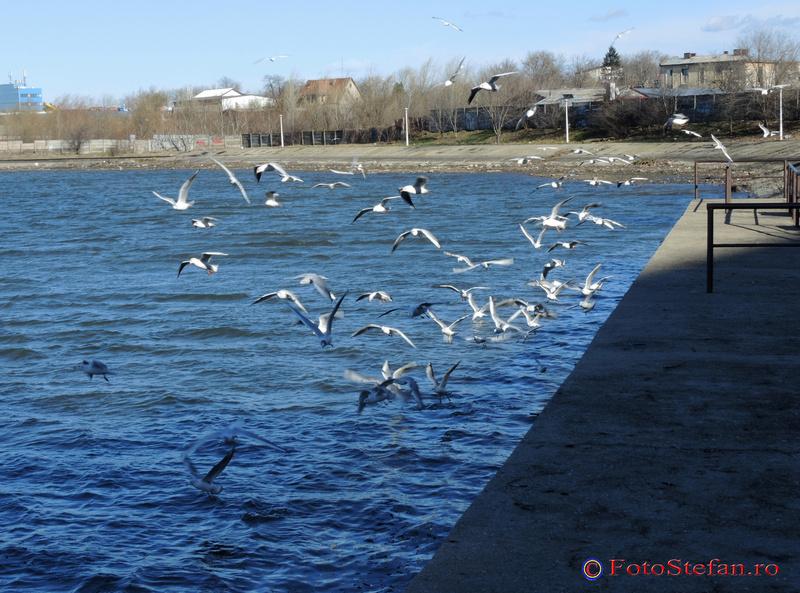 pescarusi lacul plumbuita colentina