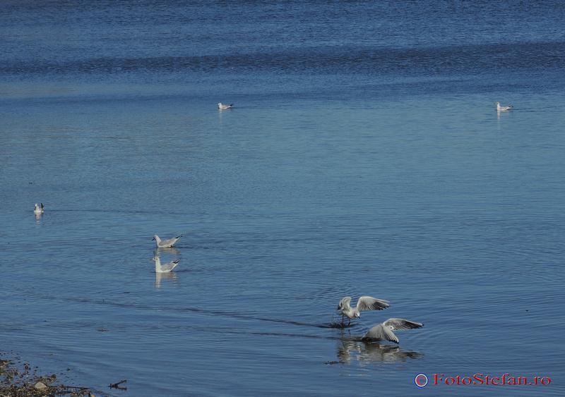 pescarusi lacul plumbuita