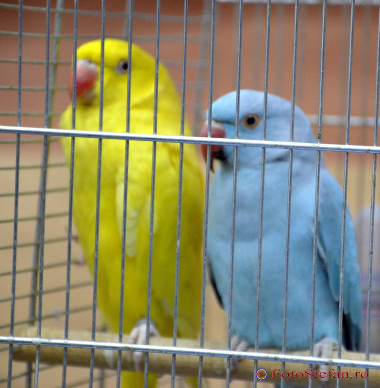 poze foto papagali colorati