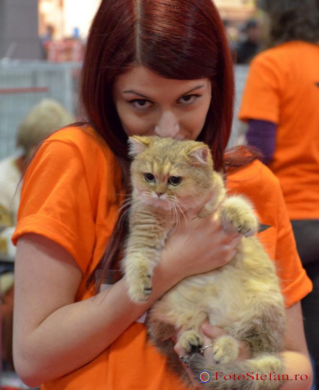 pisicute romexpo bucuresti