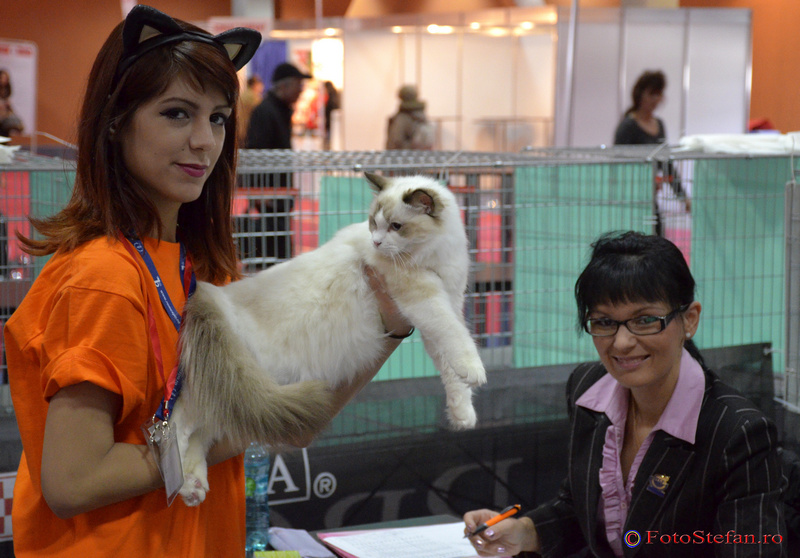 concurs feline romexpo bucuresti