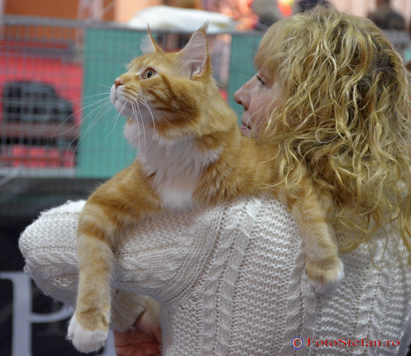 concurs feline romexpo