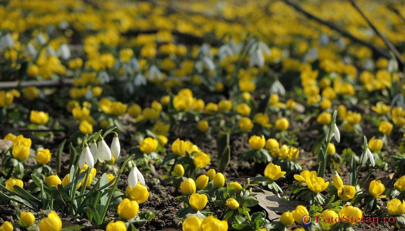 flori de primavara bucuresti